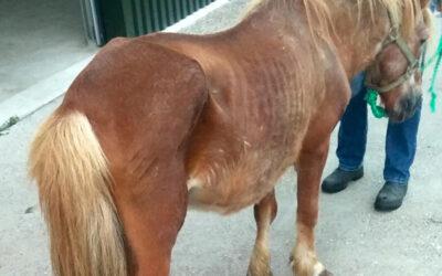 Gebitsproblemen bij oude paarden
